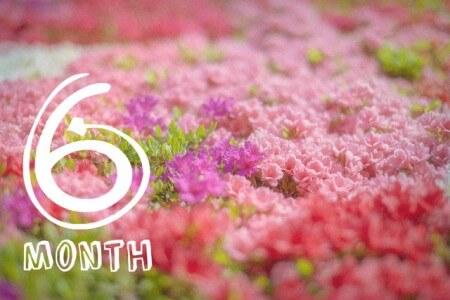 妊娠6ヶ月(妊娠20週,21週,22週,23週・妊娠中期)の体の様子
