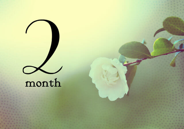 妊娠2ヶ月(妊娠4週,5週,6週,7週・妊娠初期)の体の様子