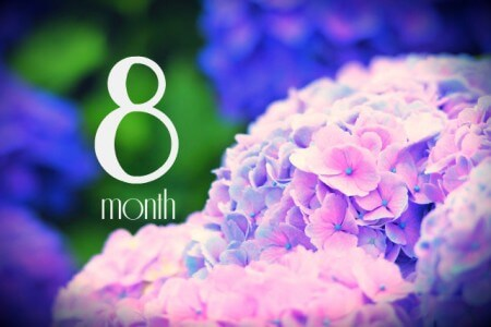 妊娠8ヶ月(妊娠28週,29週,30週,31週・妊娠後期)の体の様子