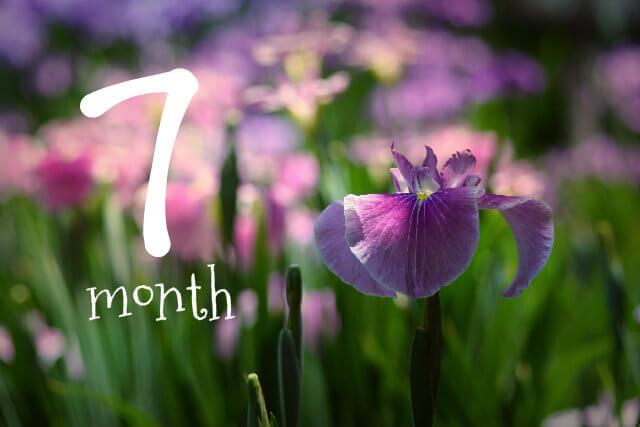 妊娠7ヶ月(妊娠24週,25週,26週,27週・妊娠中期)の体の様子