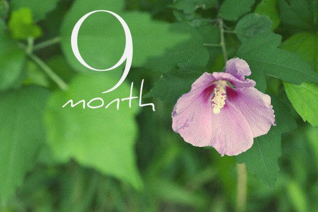 妊娠9ヶ月(妊娠32週,33週,34週,35週・妊娠後期)の体の様子