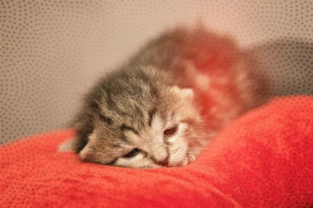 悲しい子猫