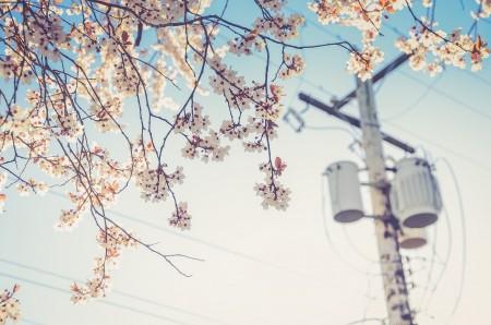 電力自由化4月から!