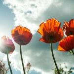 花粉は気になるけど「くる病」対策にお散歩しよ!
