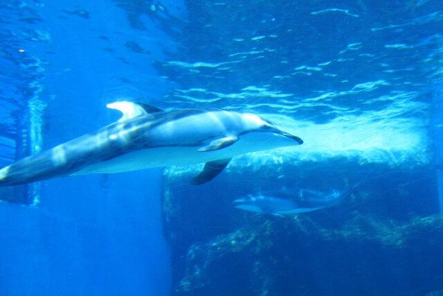 名古屋港水族館に子連れで行く時の3つのおすすめポイント