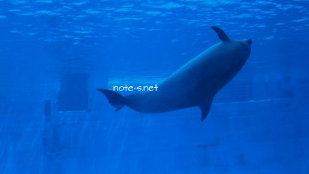 名古屋港水族館のオススメ観覧ルート【2歳児と夏休み期間中】