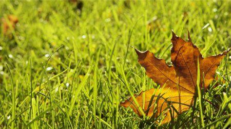 季節の変わり目は免疫が下がり体調管理が難しい