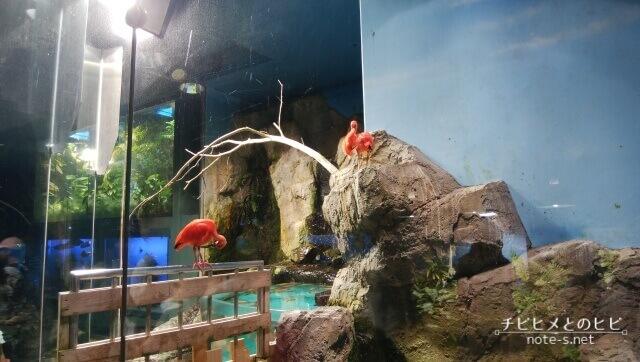 鳥羽水族館 見どころ